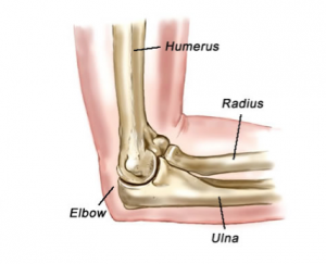 Lateral Elbow anatomy
